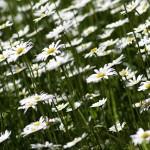 Okrasná zahrada, na které si pochutnáte