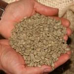 Zelená káva – pomocník při hubnutí a detoxikaci?