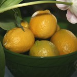 Jarní očista vašeho těla